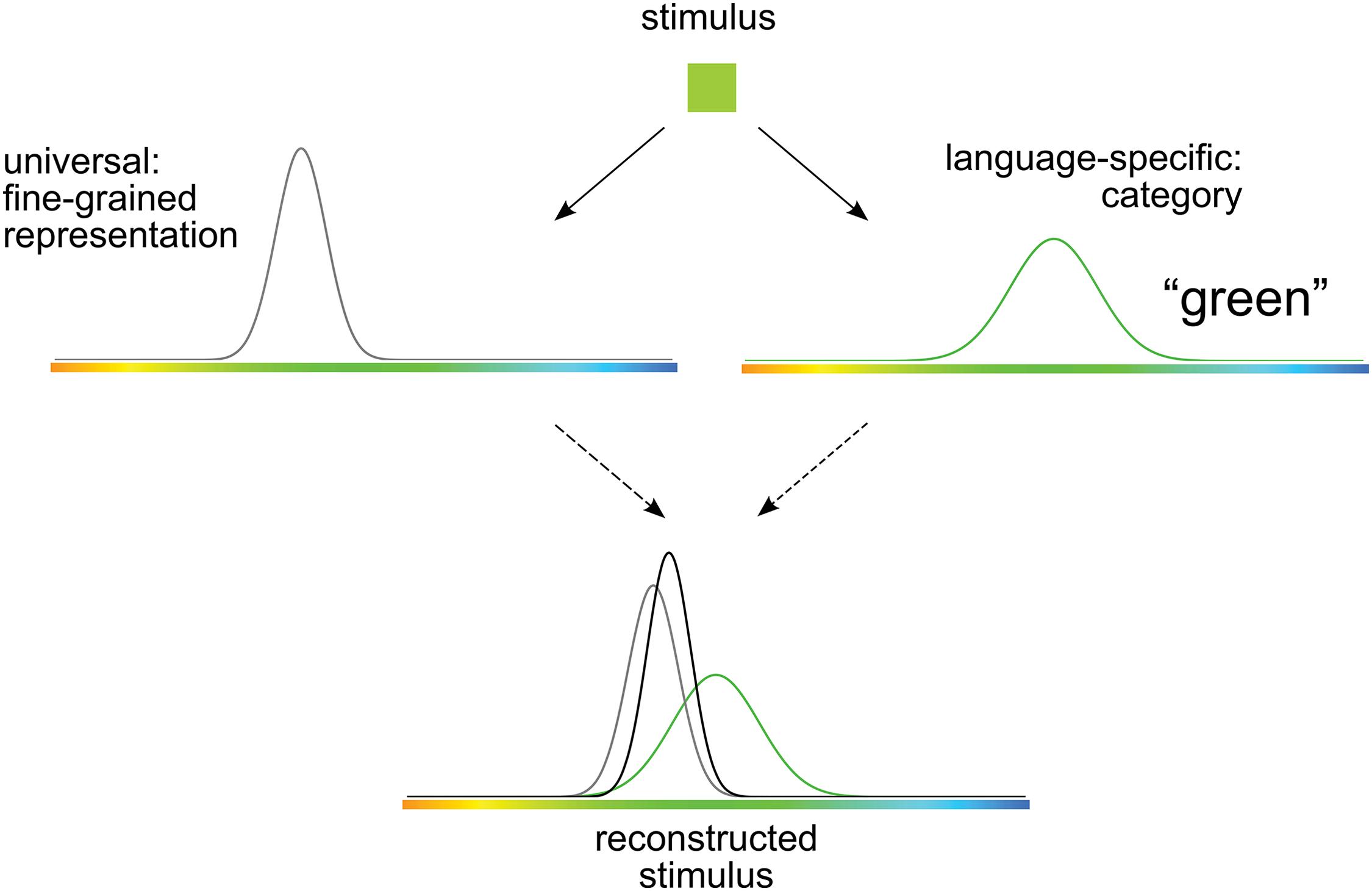 Cibelli et al. 2016, Figure 1